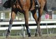 race horse hooves
