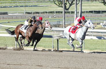 race horses stretching 3