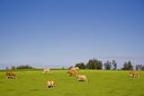 landwirtschaftliche idylle poster