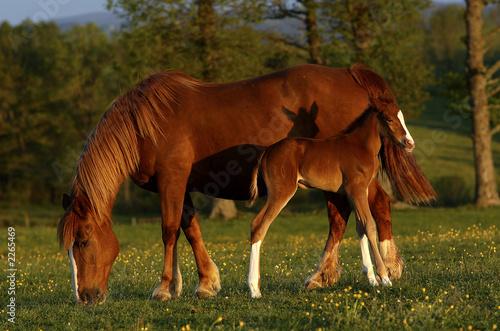 Fototapeta noworodek - zwierzę - Zwierzę Hodowlane