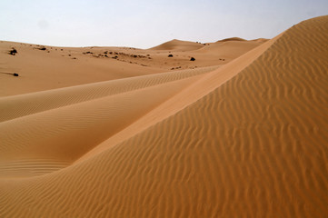 liwa desert 8