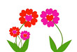 Постер, плакат: fleurs de saint valentin