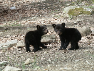 two little cubs looking back at me