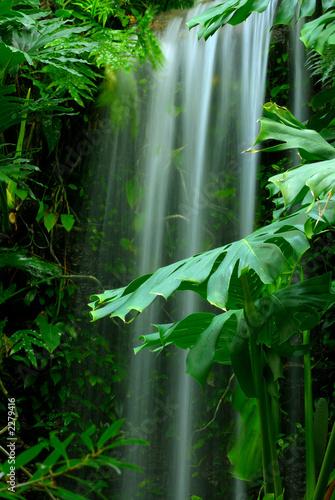 fototapeta na ścianę waterfall in the rainforest