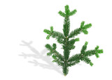 spruce twig with shadow poster