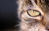 ojo gato poster