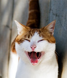 gato mosca poster