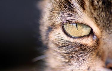 ojo gato
