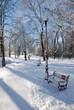 park alley in winter