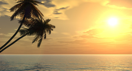 palms_sunset2_p