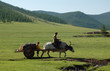 corvée d'eau à dos de yak