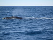 whale's blowhole