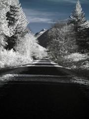 infrared landscape_007.jpg