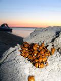 lot of ladybugs on sunrise poster