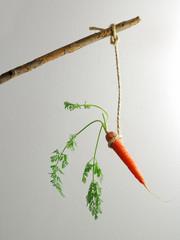 baton carotte 2