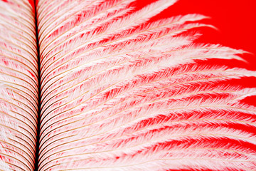 macro of a white feather on red background