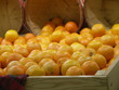 whole lot of oranges