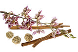 oriental. orchid and cinnamon poster