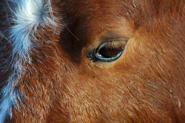 oeil de poney n°2
