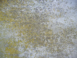 moss concrete background poster
