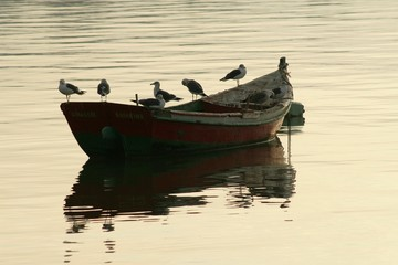 the boat and the seagull