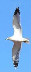 seagull on side