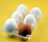 eggs on yellow background