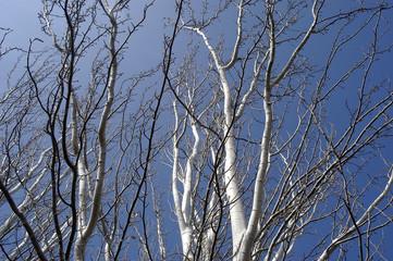 invierno-21