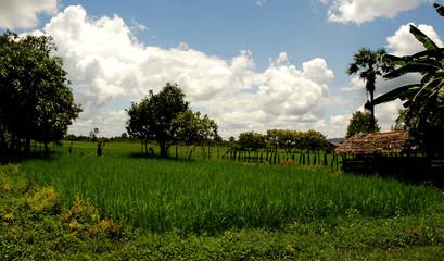 rice paddy village