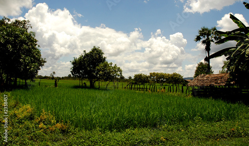 rice paddy village