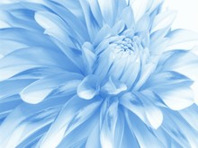 "Постер, картина, фотообои ""soft blue floral background for card"""