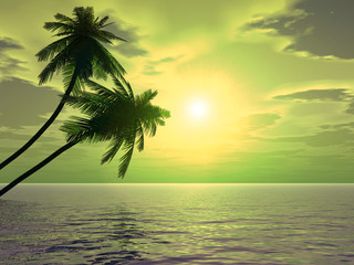 palms_sunset2_a