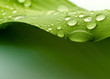 Quadro leaf