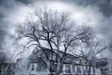 dramatic trees poster