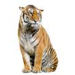 tigre assis sur son socle