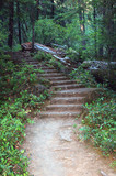 forest trail-