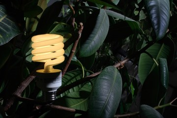 compact fluoescent lightbulb, among leaves.