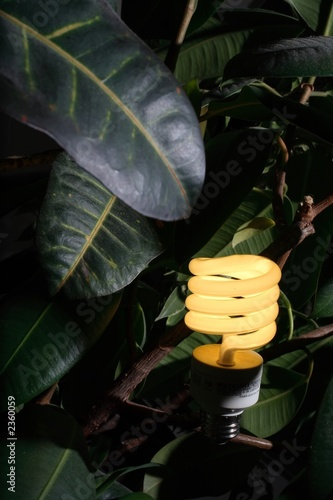 poster of compact fluoescent lightbulb, among leaves.
