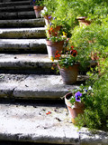 rustic steps poster