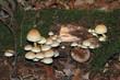 souche et champignons