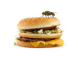 home fly sitting on appetizing hamburger poster
