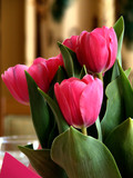 tulips on the tabletop poster
