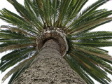 palm tree overhead poster