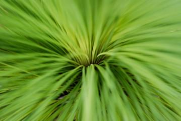 leafy grass