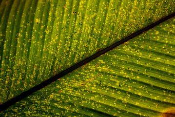 a drying leaf