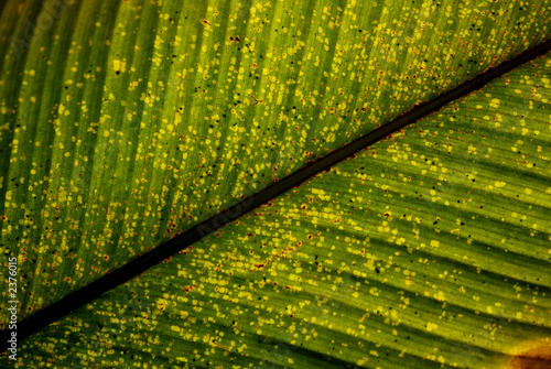 a drying leaf
