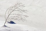 winter scenery, twig poster