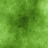 green snake skin poster
