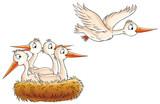 Fototapety stork nest