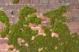 moss covered brick wall poster